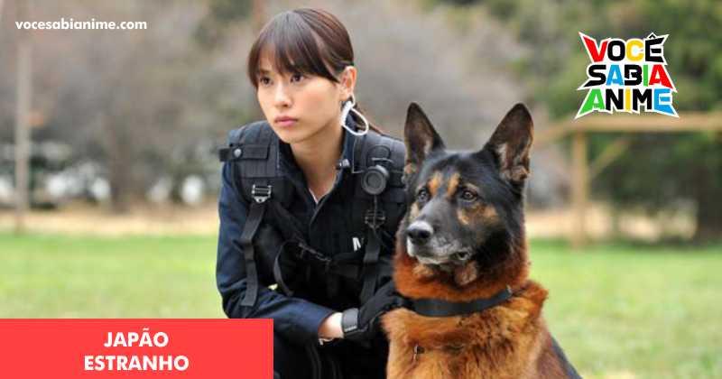 Polícia Japonesa busca Cão de busca que fugiu durante busca policial